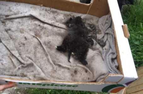 FOTO e VIDEO | Colonia felina Ex Manicomio, sopralluogo del Rettore con il Meta: trovato un gatto morto, salvati altri 5 cuccioli