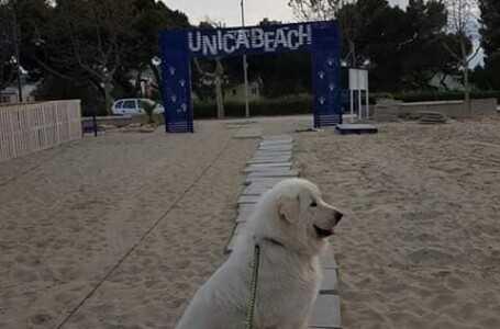 Giulianova, sabato 1° giugno riapre la spiaggia per cani Unica Beach