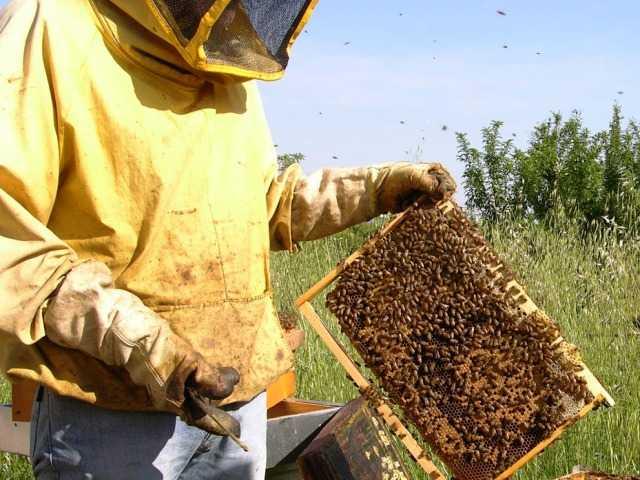 Giunta Abruzzo: ok a vari provvedimenti riguardanti anche l'apicoltura