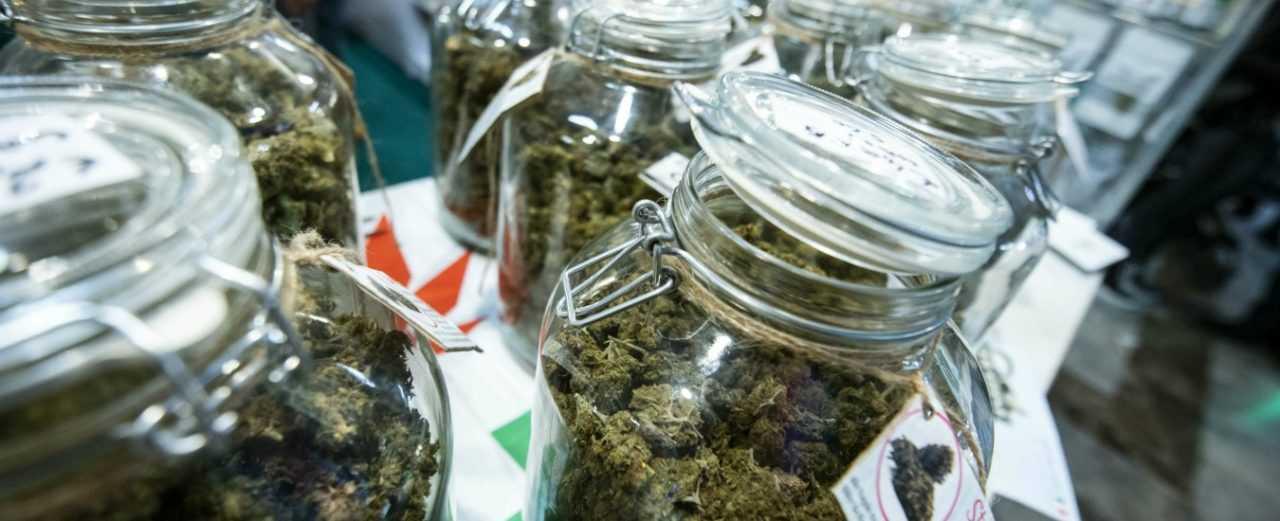 Referendum Legalizzazione Cannabis, si attiva anche Teramo dopo l'eutanasia legale