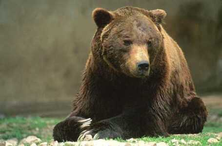 WWF, concorso per i più piccoli sull'Orso marsicano