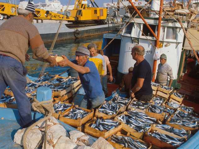 Pesca, arriva il fermo dal 17 agosto al 16 settembre: il momento è difficile