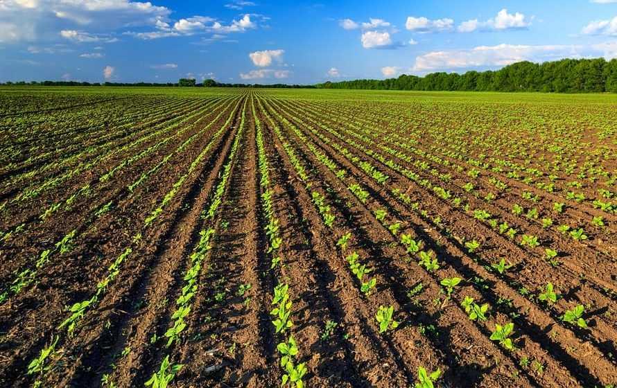 Giornata ambiente, Italia festeggia agricoltura più green in Ue