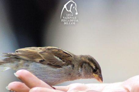 LNDC, i consigli per aiutare gli uccelli durante l'inverno