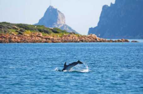 Area Marina Protetta, salvare delfini e pescatori: arriva il progetto Life Delfi
