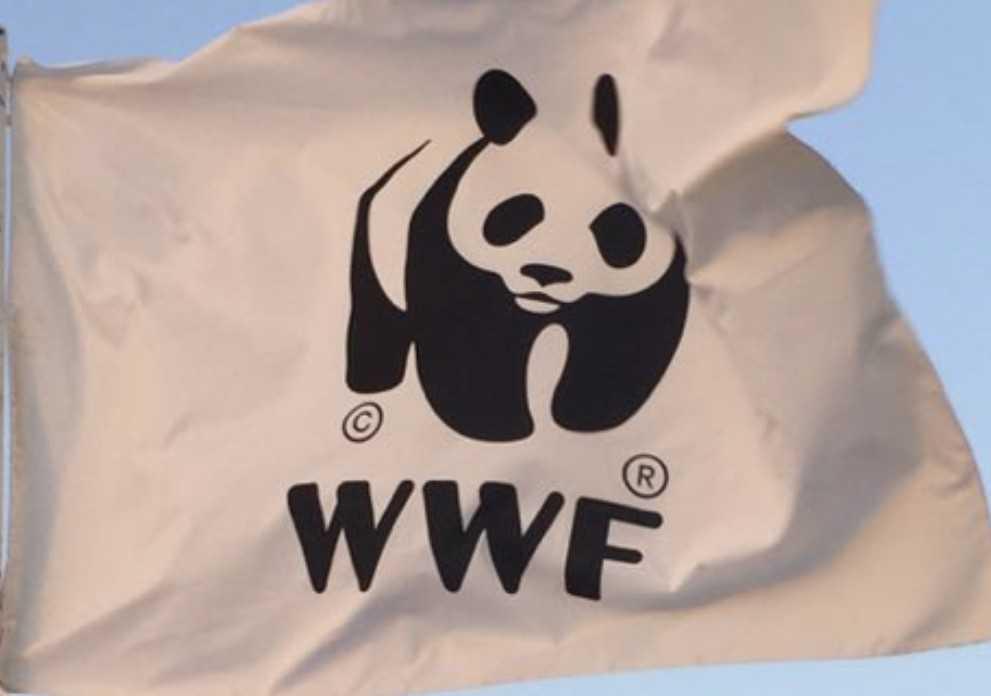 WWF, si sta perdendo la sfida per la salvezza dell'orso: fermi gli enti e le istituzioni