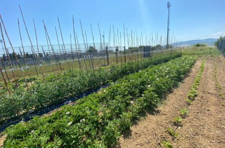 Morro d'Oro, nello stadio comunale si producano ortaggi: scoperto orto all'interno dell'impianto