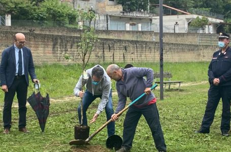 """Teramo, il WWF pianta due alberi nel parco fluviale Vezzola: """"Ripartire da tutela ambientale e impegno per salvaguardare natura""""   FOTO e VIDEO"""