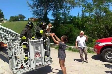 VIDEO | Campli, il cagnolino Pablo finisce su un albero: recuperato dai Vigili del Fuoco