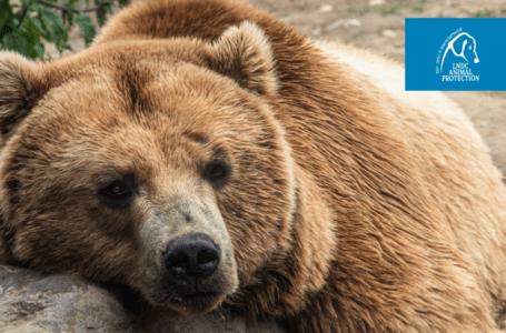 Tutela Orsi, per la Lega del Cane Parco Nazionale D'Abruzzo esempio da seguire in Italia