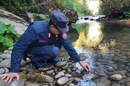 Valle Castellana, catturava gamberi di fiume in estinzione: denunciato e sanzionato