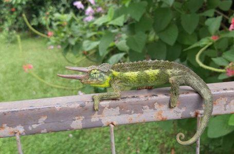 FOTO | Citizen Science, segnalare e conoscere i gechi con le foto. Fino al 30 settembre