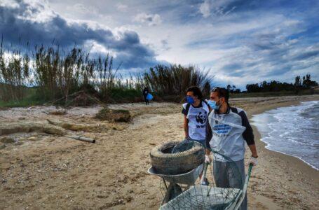 Boom di nidi di Fratino nella Riserva del Borsacchio: i dati del Progetto Salvafratino Abruzzo 2020