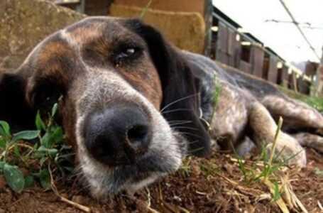 Animali, in Italia avvelenato un cane ogni 16 minuti e l'Abruzzo è terzo in graduatoria