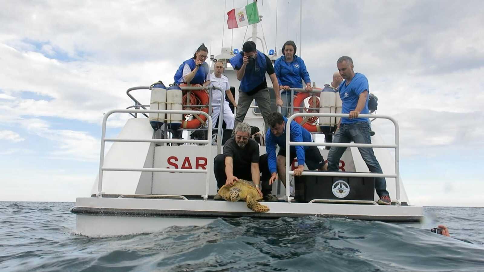 Rete AdrioNet per salvare le tartarughe marine dai danni di ami, lenze, fiocine e persino palloncini di plastica