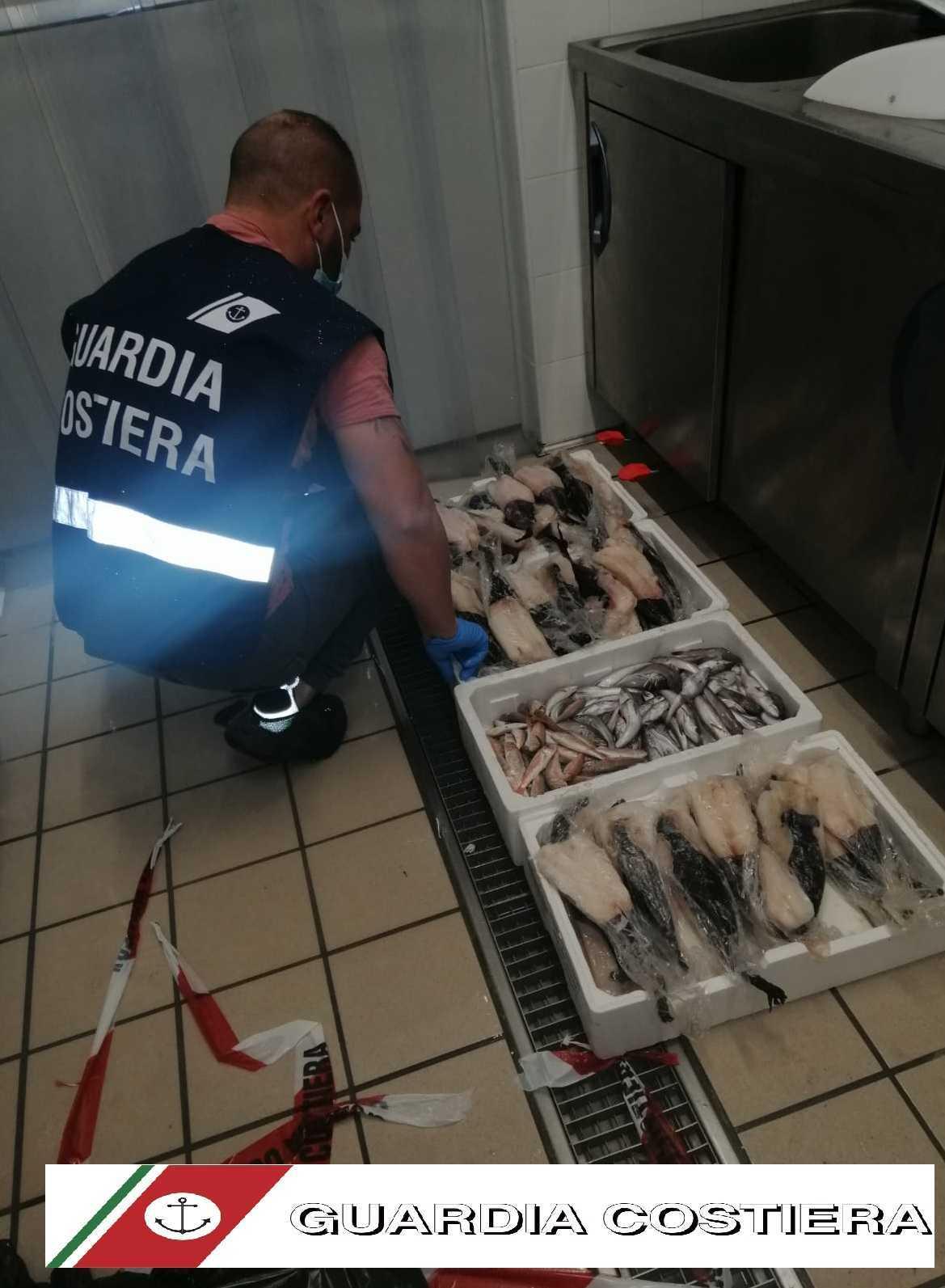 Guardia Costiera ispeziona il Mercato Ittico di Giulianova e pescherie di Tortoreto: sequestrati 18 kg di rane, merluzzi e triglie e sanzioni per 1.500 euro