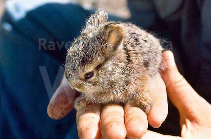 WWF e Carabinieri Forestali per il soccorso alla fauna in difficoltà