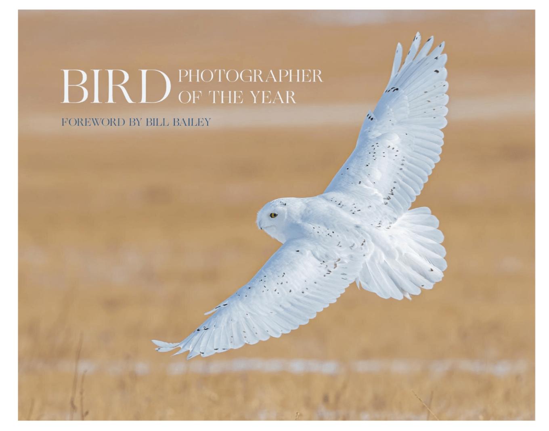 """FOTO   Riconoscimento per Ferretti e Iacovoni, attivisti dell'Oasi del Fratino e della Camomilla di mare di Giulianova: le loro foto sul """"Bird Photographer of the Year"""""""