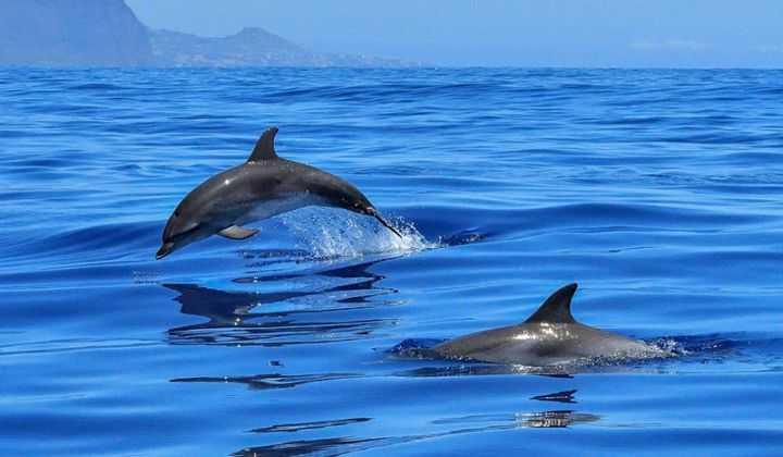 Emergenza delfini spiaggiati al Borsacchio, interazioni con l'uomo certificate dall'IZS