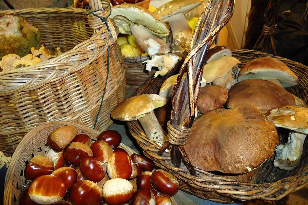 FOTO | I frutti del bosco e sottobosco nella Cena Ecumenica dell'Accademia Italiana della Cucina. Il 21 ottobre a Campli